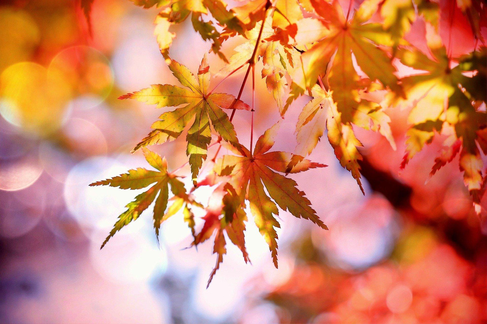 Trädgårdskalendern – 7 tips för oktober
