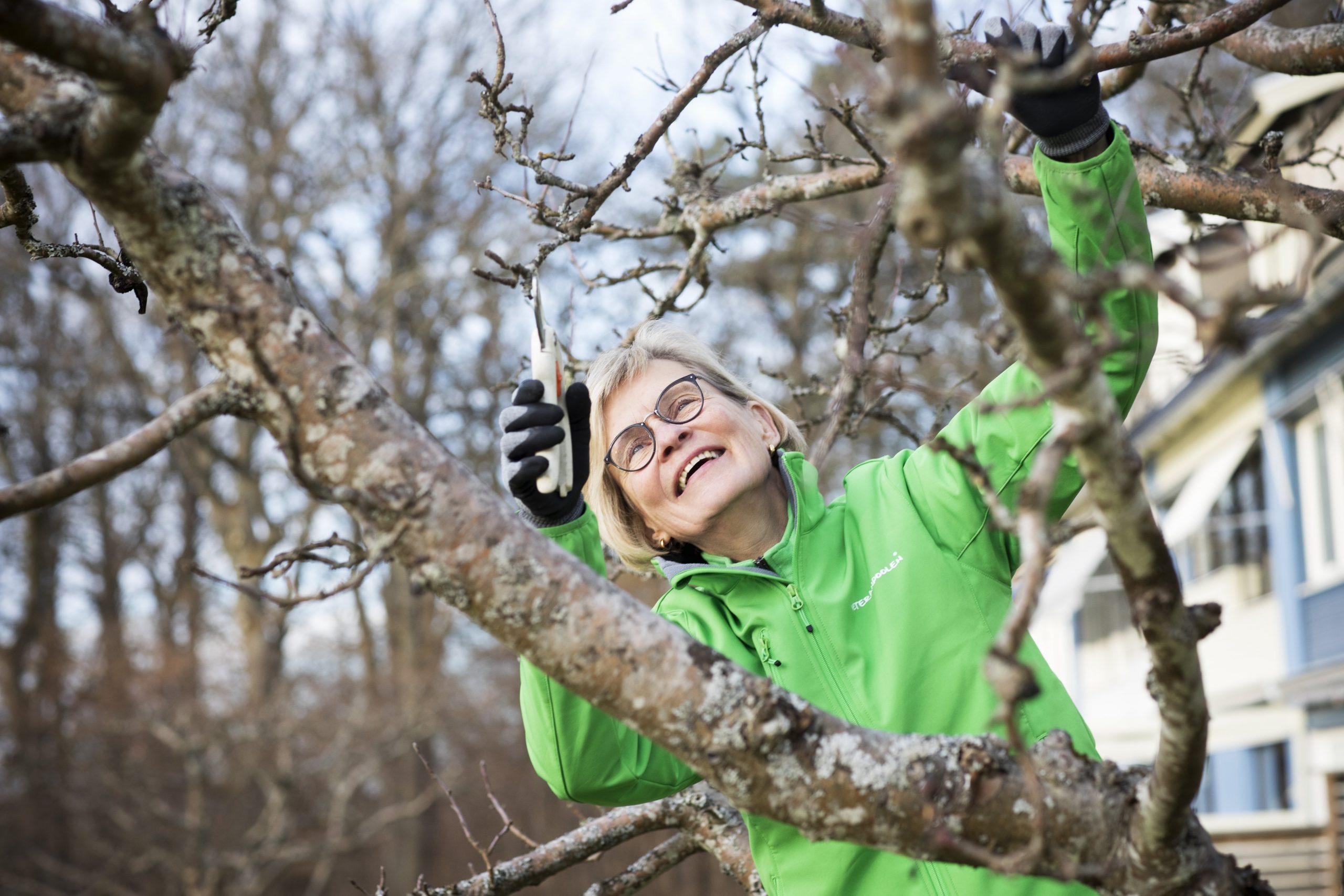Trädbeskärning tidig vårvinter